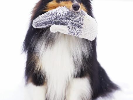Récompenser son chien en hiver