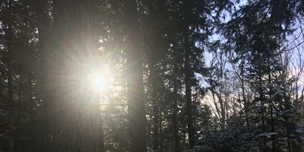 Let's Talk Trees: Winter Tree Identification 101