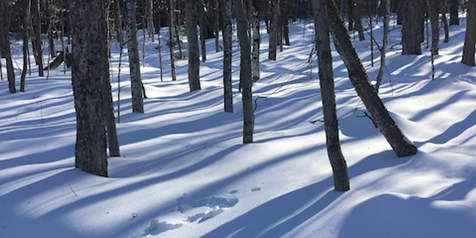 Let's Talk Trees: Winter Tree ID, Part 2