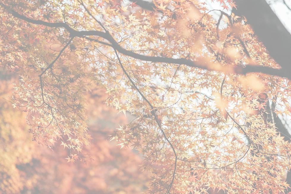 insung-yoon-aIwx5w9WWng-unsplash 透明-01.jpg