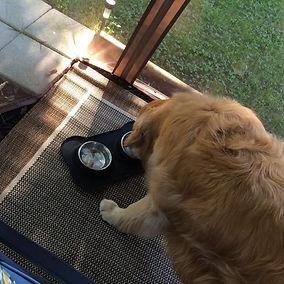 dog bowl 2.jpg