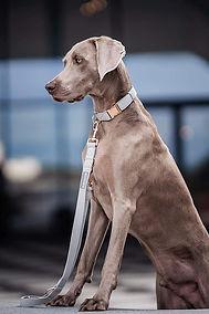 collar leash set 2.jpg