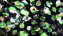 Video August Garden.JPG