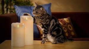 cat candle.jpg