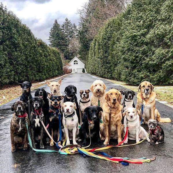 寵物團體照.jpg