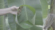 Screen Shot 2019-01-09 at 15.59.16.png