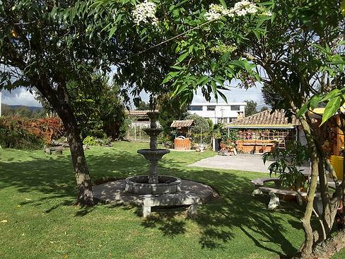 acacias1.jpg