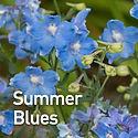 Delphinium g. Summer Blues - Larkspur.jp