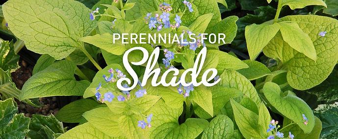 perennials for shade.jpg