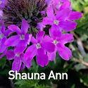 Verbena c. Shauna Ann - Vervain.jpeg