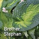 Hosta Brother Stephan