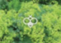 Perennials for Bees - Alchemilla Thriller