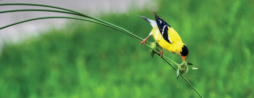 Perennials for birds
