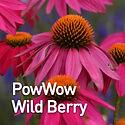 Echinacea PowWow Wild Berry - Coneflower