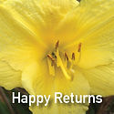 Hemerocallis Happy Returns - Daylily