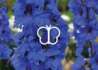 Perennials for Butterflies - Delphinium