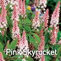 Tiarella Pink Skyrocket - Foam Flower.jp