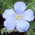 Linum p Sapphire - Flax.