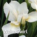 Iris s. White Swirl - Siberian Iris.jpeg