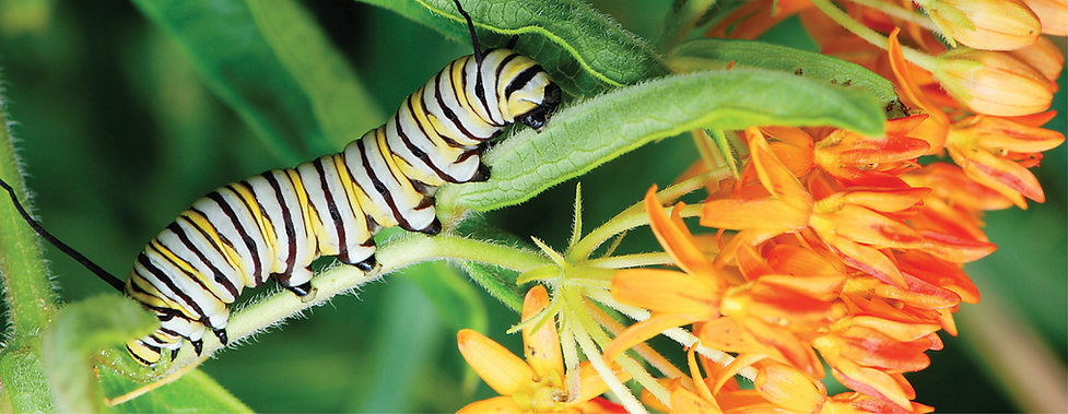 Top 18 Perennials for Butterflies