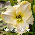 Hemerocallis Marque Moon - Daylily.jpeg