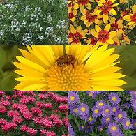 Bee Lovers Bundle.jpg