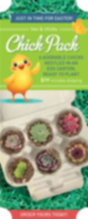 Sempervivum Chick Pack