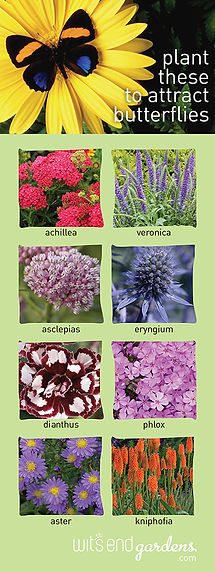 plant these to attract butterflies