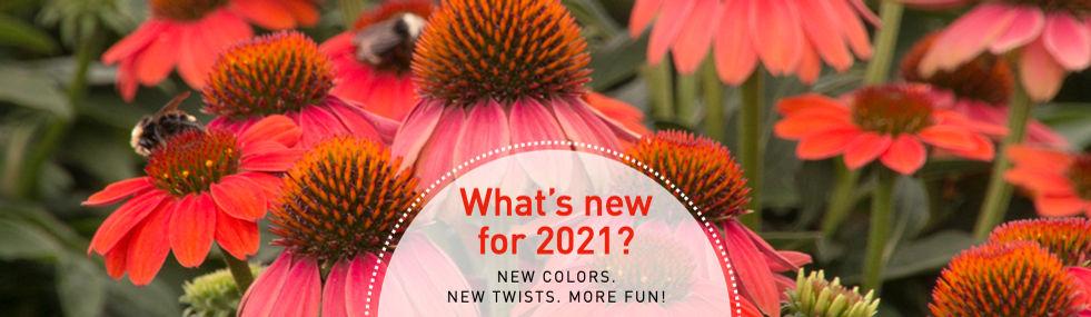 New plants for 2021.jpeg