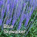 Veronica Blue Skywalker - Spike Speedwel