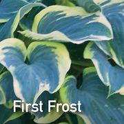 Hosta First Frost