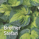 Hosta Brother Stefan.jpeg
