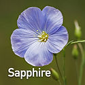 Linum p. Sapphire - Flax.jpeg
