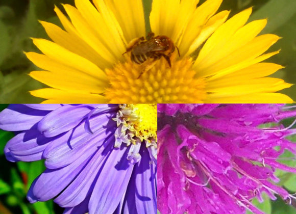 Bee Lovers Bundle