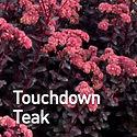Sedum Touchdown Teak - Stonecrop.jpeg