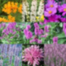 Pollinator Power Pack