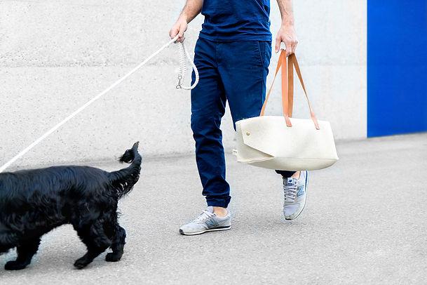 Ivy - canine culture, modern dog brand