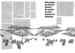 Illustratio von schweizer Kühen, design by Kathrin Nutter Design Sudio, Baden, Aargau, Schweiz