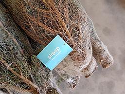 Weihnachtsbaumverkauf für siroop.jpg