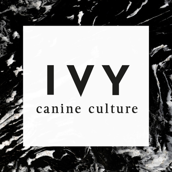 IVY – canine culture