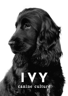 Ivy - canine culture