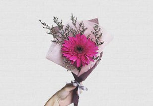 single stalk gerbera bouquet singapore rose