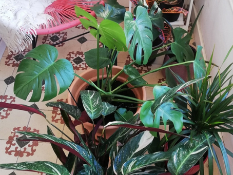 7 lecciones que aprendí con mis plantas