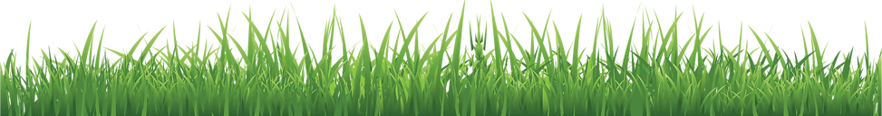 grass_PNG10854 (1).png