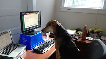 Rook the dog working