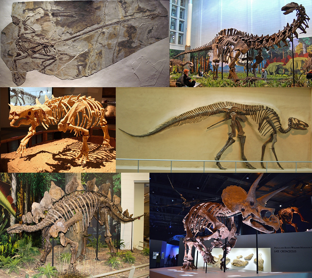 Wikimedia Commons License: https://commons.wikimedia.org/wiki/File:Dinosauria_montage_2.jpg