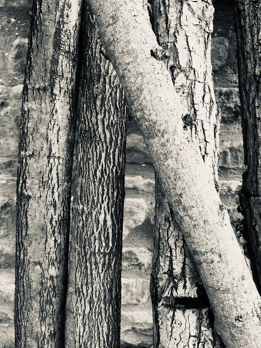 Cut Branches-Blk & White-Aug 2019.jpg