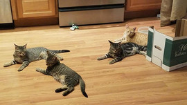 Nigel, Bob, Maverick & Penny