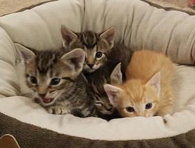 Bob, Nigel, Maverick & Penny