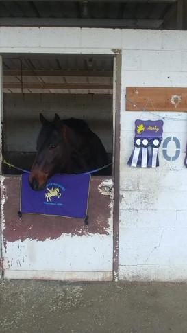 Horse show in Temecula, CA